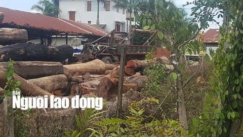 Trum go lau Phuong 'rau': Tu nguoi lam thue thanh dai gia khet tieng hinh anh