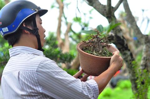 Goc vu sua ky quai gia 120 trieu o hoi thi bonsai hinh anh 12