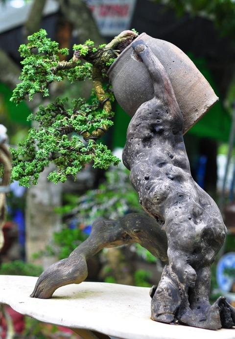 Goc vu sua ky quai gia 120 trieu o hoi thi bonsai hinh anh 6