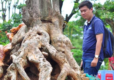 Goc vu sua ky quai gia 120 trieu o hoi thi bonsai hinh anh