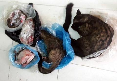 Chủ tịch Hội Chữ thập đỏ xã rao bán động vật hoang dã trên Facebook