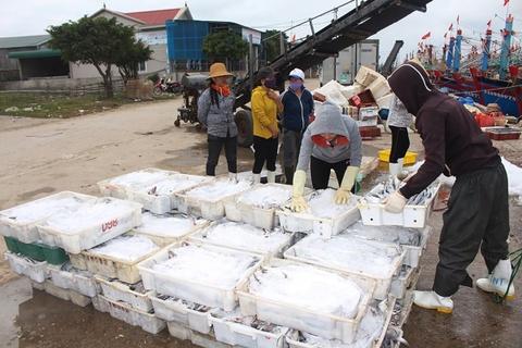 Ra khơi đầu năm, ngư dân trúng đậm mẻ cá hố