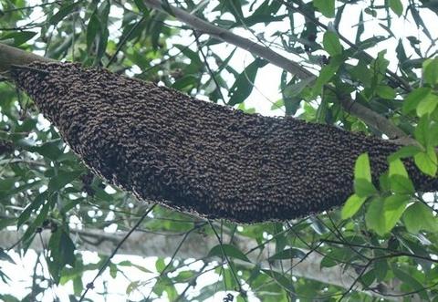 Đi tảo mộ ngày rằm, nhiều người bị ong đốt