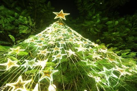 Khu vuon Noel dep long lay cua sinh vien Thang Long hinh anh 5 Tán cây phượng được xếp khéo léo thành một cây thông khổng lồ.