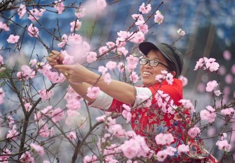 Le hoi hoa anh dao Ha Long tat bat truoc gio khai mac hinh anh 4