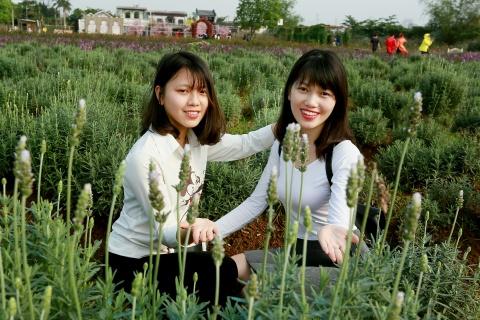 Canh dong hoa lavender dau tien o Ha Noi hinh anh 7