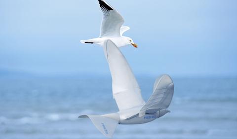 SmartBird - robot bay luon nhu chim hai au hinh anh