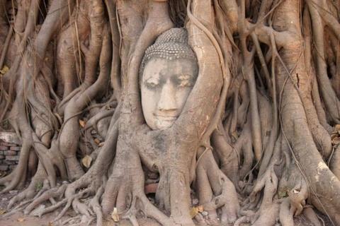 Cung co gai Viet toi Ayutthaya, xem mat Phat trong re cay hinh anh