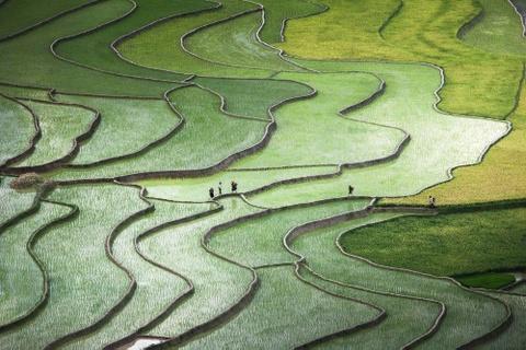 Anh cua co gai Viet vao chung ket National Geographic hinh anh 1 Nguyễn Quỳnh Anh ghi lại khoảnh khắc những người H'mong trên đường về nhà giữa những thửa ruộng xanh đầu mùa. Bức ảnh được đánh giá cao nhờ màu sắc và sự tương phản độc đáo.