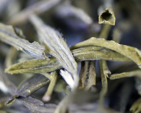 """Tien canh dinh Quang Minh noi vo lam quan tu hinh anh 12 Hoàng Sơn còn có trà Mao Phong, một trong """"thập đại danh trà"""" của Trung Quốc. Cây trà sinh trưởng trên núi cao, quanh năm sương khói nên có vị ngon độc đáo.  Ảnh: Tea-terra."""