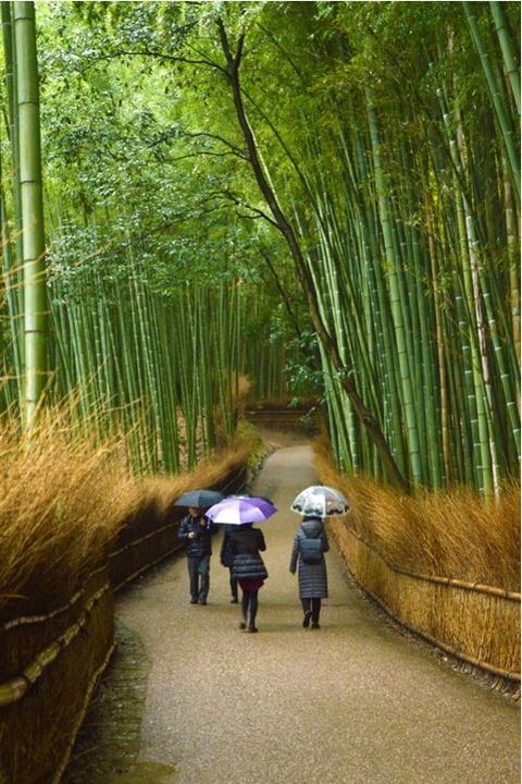 Anh cua co gai Viet vao chung ket National Geographic hinh anh 8 Rừng tre Arashiyama ở Kyoto, Nhật Bản, dưới góc máy của Jenilyn Fabian.