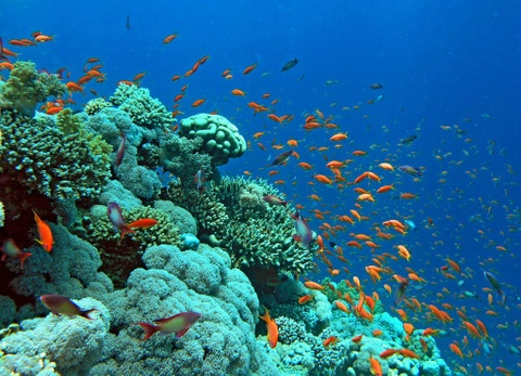 Am thuc via he Viet Nam vao top trai nghiem tuyet nhat hinh anh 10 Lặn ngắm hệ sinh thái dưới biển Đỏ, Ai Cập: Từng là một làng chài bình yên, giờ đây Hurghada đã trở thành điểm đến hút khách nhờ những tour lặn biển độc đáo. Các đảo và rạn san hô chỉ cách Hurghada vài tiếng đi thuyền. Các vùng nước nông với hệ động vật biển phong phú đem lại cho du khách một trải nghiệm khó quên.