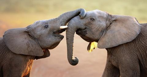 Nhung dieu khien Nam Phi hap dan du khach hinh anh 2 Động vật hoang dã: Nam Phi có bộ 5 động vật hoang dã nổi tiếng, gồm sư tử, voi, báo và tê giác. Ngoài ra, vùng đất tuyệt đẹp này còn có nhiều động vật thú vị như hà mã, hươu cao cổ, linh dương đầu bò, chồn meerkat, linh cẩu, đà điểu... Ảnh: Sabi-sands.