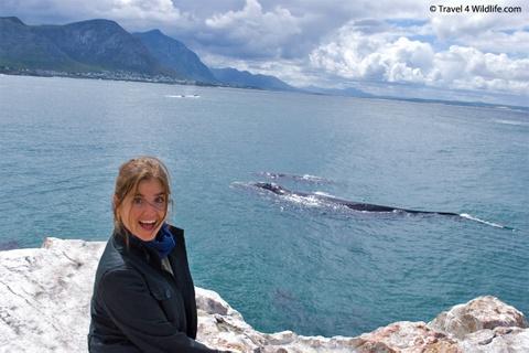 Nhung dieu khien Nam Phi hap dan du khach hinh anh 3 Thiên đường ngắm cá voi: Đây là một trong số ít những nơi trên thế giới mà du khách có thể ngắm nhìn những con cá voi từ đường mòn cạnh biển, từ các nhà hàng, quán cà phê, thậm chí là từ giường khách sạn. Ảnh: Travel4wildlife.