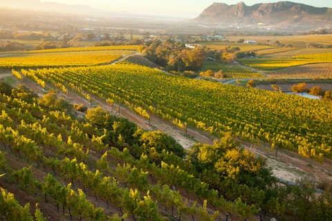 Nhung dieu khien Nam Phi hap dan du khach hinh anh 6 Rượu vang: Nam Phi có 4 vùng trồng rượu vang chính, gồm Stellenbosch, Paarl, Franschhoek và Wellington, nơi du khách có thể khám phá các phòng trưng bày nghệ thuật, nếm thử rượu vang và các món ăn địa phương. Ảnh: Bloomberg.