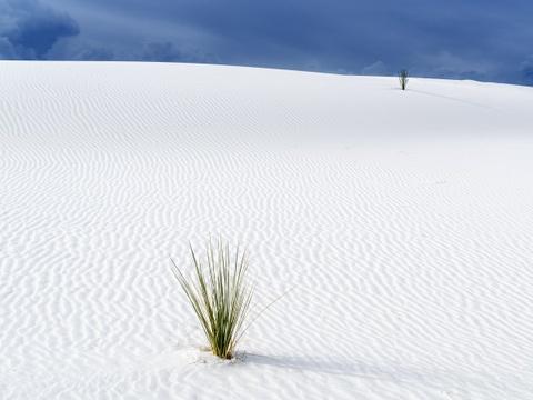15 ky quan thien nhien tuyet tac o My hinh anh 12 New Mexico: Bang New Mexico sở hữu những đụn cát thạch cao lớn nhất thế giới. Bạn sẽ được chiêm ngưỡng một vùng cát trắng như tuyết trải rộng hơn 700 km2 dưới bầu trời xanh biếc.