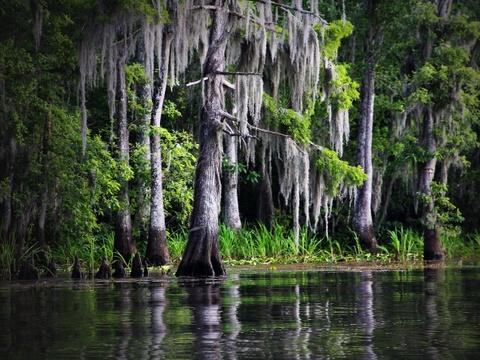 15 ky quan thien nhien tuyet tac o My hinh anh 7 Louisiana: Vùng đầm lầy độc đáo của Louisiana thực chất là những nhánh sông chảy chậm với hệ động thực vật đặc hữu. Với chiều dài lên tới 600 km, Bartholomew là nhánh sông dài nhất thế giới.