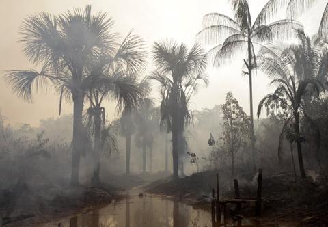 Cuoc song chat vat cua con nguoi trong rung Amazon hinh anh 12 Gần 20% rừng Amazon đã bị chặt hạ trong 40 năm qua, nhiều hơn con số tổng cộng của 400 năm trước đó, kể từ thời người châu Âu bắt đầu tới đây.
