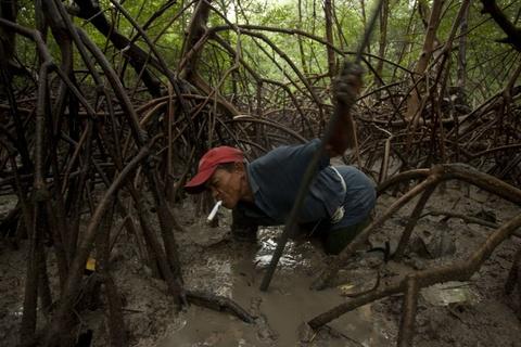 Cuoc song chat vat cua con nguoi trong rung Amazon hinh anh 16 Giá vàng tăng 360% trong thập kỷ qua, khiến ngày càng nhiều người nhập cuộc.