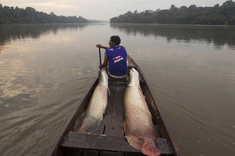 Cuoc song chat vat cua con nguoi trong rung Amazon hinh anh 6 Ngay cả những người sống ở các khu đô thị vẫn dựa vào rừng để trồng trọt, dựng nhà, lấy thuốc và kiếm sống.