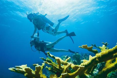 10 diem du lich noi danh o que huong tan Hoa hau Hoan vu hinh anh 9 Đảo Malapascua: Hòn đảo nhỏ nhắn với làng chài bình yên này hấp dẫn du khách bởi những điểm lặn tuyệt đẹp. Đây cũng là nơi duy nhất trên thế giới bạn có thể thường xuyên thấy cá nhám đuôi dài, ngoài ra còn có cá đuối và cá mập đầu búa. Các bãi cát trắng mịn, làn nước trong vắt với rặng dừa xanh tươi cùng các rạn san hô rực rỡ đem lại cho du khách nhiều trải nghiệm khó quên.