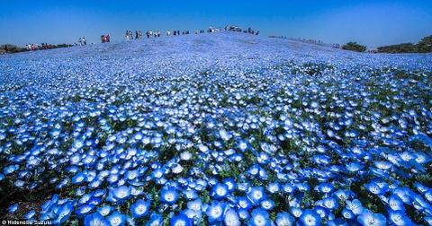 hoa xanh o cong vien hitachi hinh anh