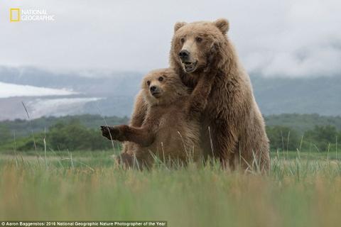 The gioi ky vi qua anh du thi cua National Geographic hinh anh 10