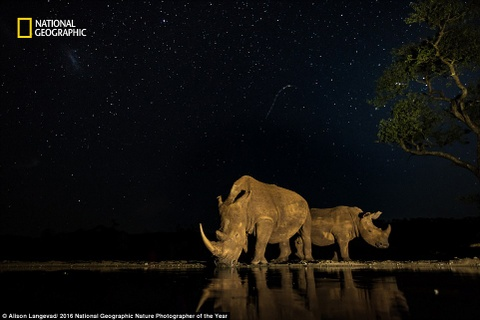 The gioi ky vi qua anh du thi cua National Geographic hinh anh 13