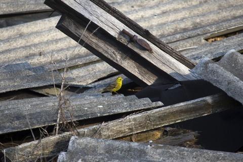 Vuong quoc dong vat hoang da o vung phong xa Chernobyl hinh anh 12
