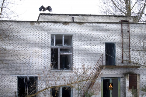 Vuong quoc dong vat hoang da o vung phong xa Chernobyl hinh anh 9