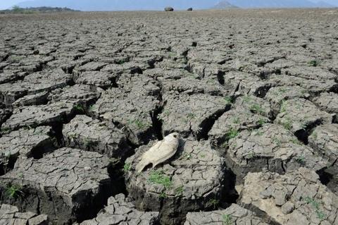 El Nino, bien doi khi hau khien nua Viet Nam thanh chao lua hinh anh