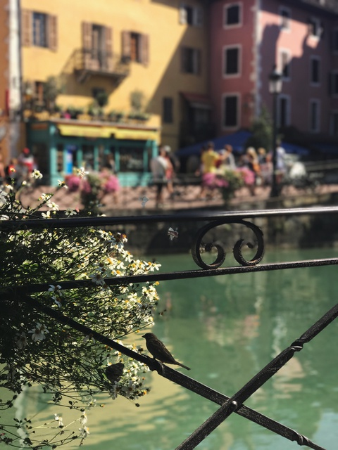 #Justgo: Kham pha Annecy - 'Venice cua nuoc Phap' hinh anh 10