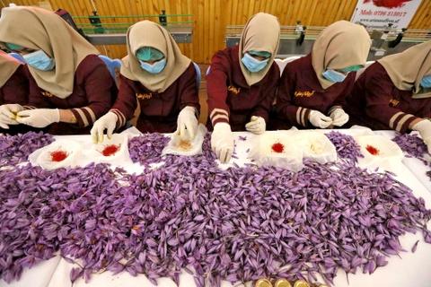 Lý giải nguyên nhân đắt đỏ của nhụy hoa nghệ tây trong ẩm thực Iran