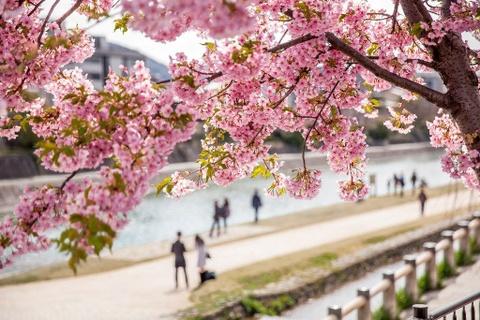 5 hoạt động phải có trong lịch trình khi du xuân Nhật Bản