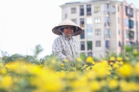 Nguoi trong hoa Tet o Sai Gon phan khoi vi thoi tiet ung ho hinh anh