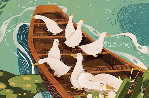 Hành trình rong ruổi kiếm ăn của hơn 2.000 con vịt đồng