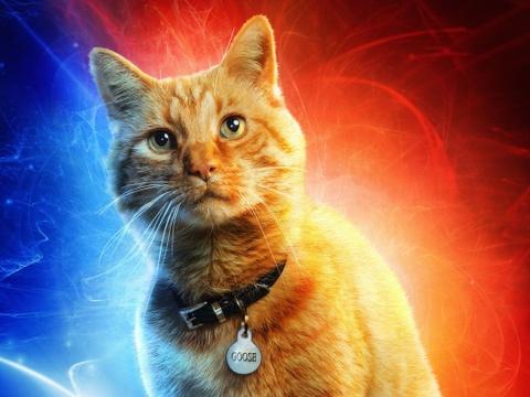 'Captain Marvel' gây xôn xao khi dành poster riêng cho một con mèo
