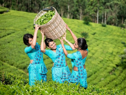 Den Sri Lanka, tan huong loat trai nghiem cuon hut khong muon ve hinh anh