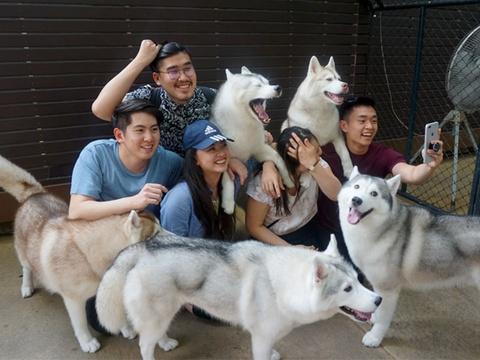 Quan ca phe Thai Lan co nhieu cho Husky cho khach choi dua hinh anh
