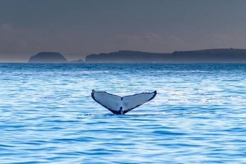 Du khách bị thương nặng vì bị cá voi quẫy đuôi vào người