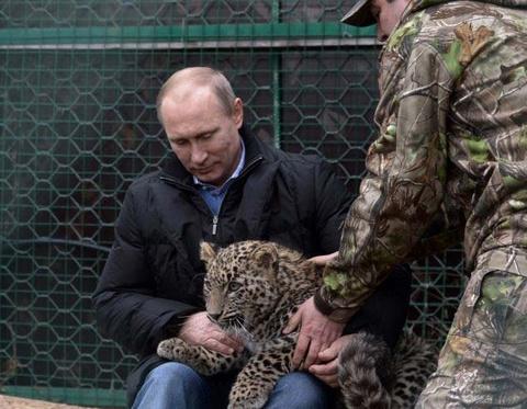 Tong thong Putin vuot ve bao quy hiem hinh anh