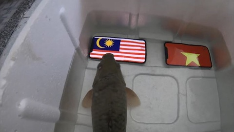 Ca 'tien tri' bi om dua sau khi du doan Malaysia thang Viet Nam hinh anh