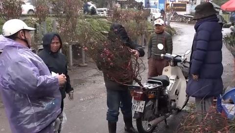 Hoa dao Tet da bat dau xuong pho Ha Noi hinh anh