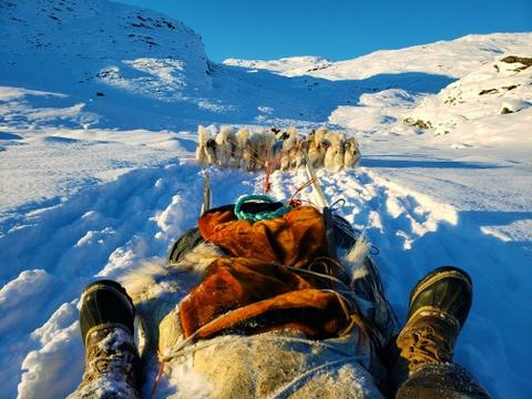 Cuoc di san hai cau bang xe cho keo voi dan ban dia Greenland hinh anh 2