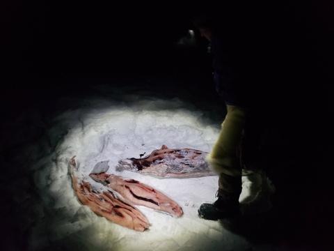 Cuoc di san hai cau bang xe cho keo voi dan ban dia Greenland hinh anh 26