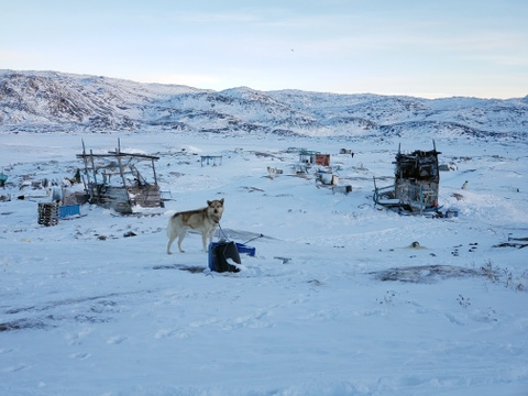 Cuoc di san hai cau bang xe cho keo voi dan ban dia Greenland hinh anh 11