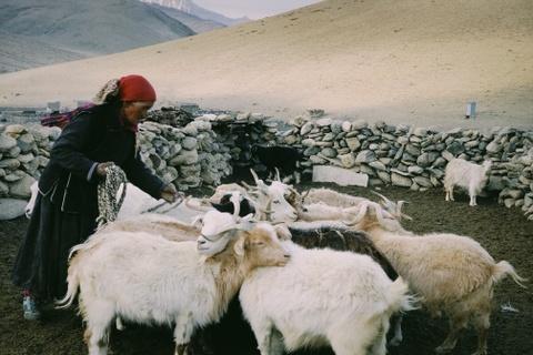 Duong den Ladakh - hanh trinh danh cho nhung doi chan khong biet moi hinh anh 46