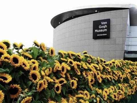 Me cung hoa huong duong dep xieu long truoc bao tang Van Gogh o Ha Lan hinh anh 6