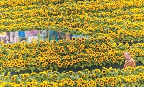 Me cung hoa huong duong dep xieu long truoc bao tang Van Gogh o Ha Lan hinh anh 2