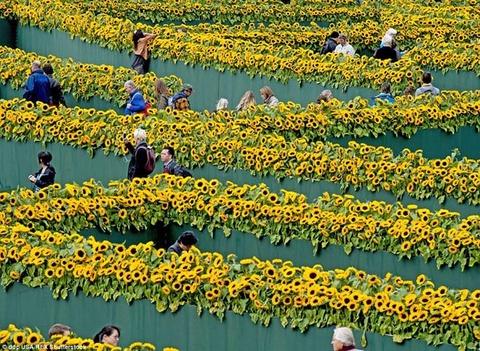 Me cung hoa huong duong dep xieu long truoc bao tang Van Gogh o Ha Lan hinh anh 3